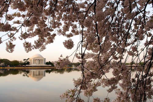 Photo Tips: How to Shoot the Cherry Blossoms