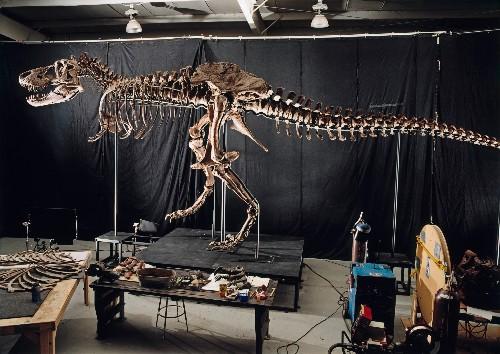 """I love finding art in science"": Go behind the scenes of dinosaur restoration"