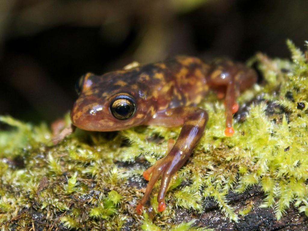Deadly Frog Fungus Pops Up in Madagascar, An Amphibian Wonderland
