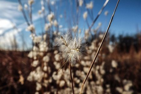 North Texas red stem grass Photo by Heath Haskell — National Geographic Your Shot
