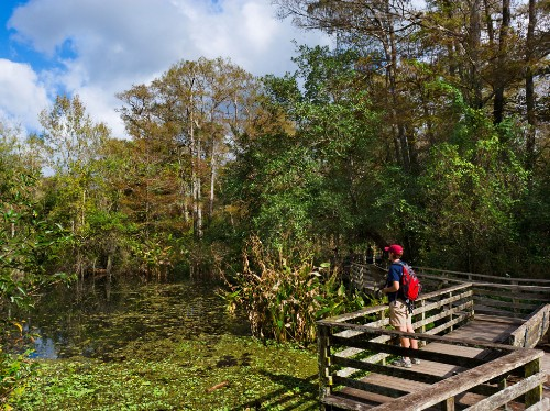 Florida by Land: Hike or Bike Through a Swamp