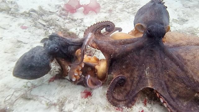 Supermoon Tide Leaves Octopus Stranded in Parking Garage