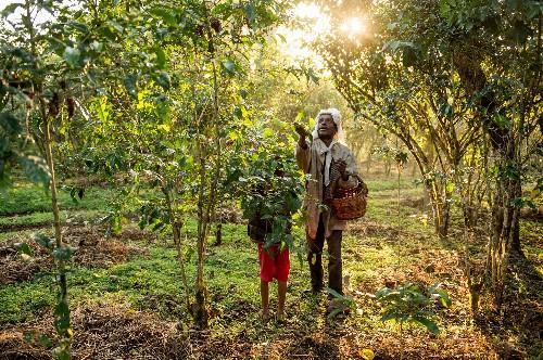 Ethiopian Shade Coffee Is World's Most Bird Friendly