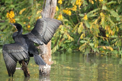 Time to spread the Wings Photo by Anil Dutt Vyas — National Geographic Your Shot
