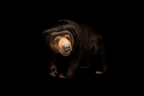 These bears mimic each other's faces as well as people do