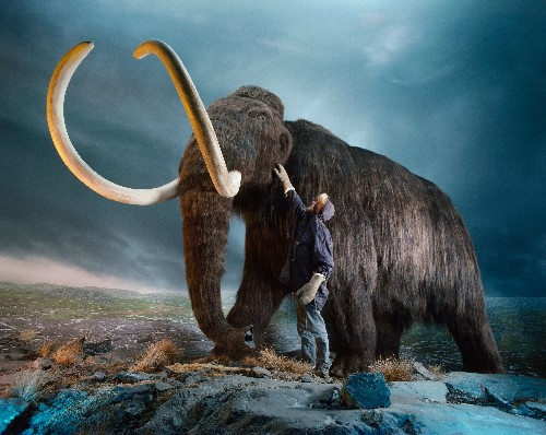 Woolly mammoths are extinct. Here's why they may be considered 'endangered.'