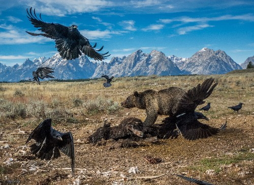 Nice Shot! How One Photographer Captured an Iconic Image in Grand Teton