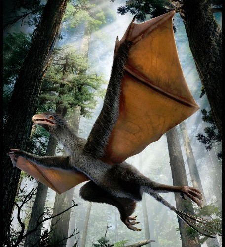 Chinese Dinosaur Had Bat-Like Wings and Feathers