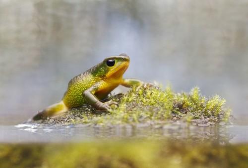 'Extinct' Toad Rediscovered in Ecuador