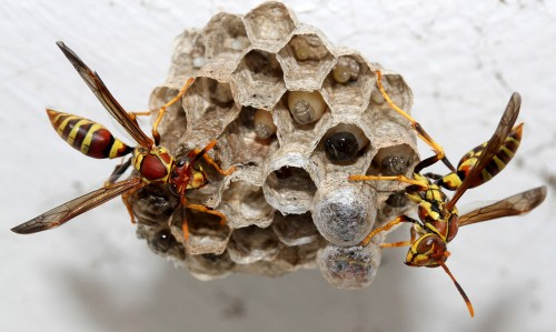 The Distributed Brainpower of Social Insects