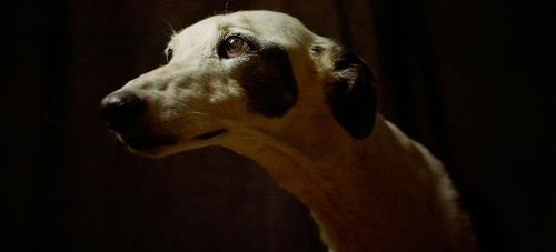 Restoring Dignity to Spain's Mistreated Hunting Dogs