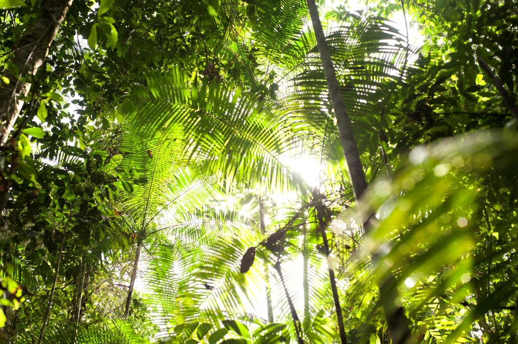 Some tropical forests show surprising resilience as temperatures rise