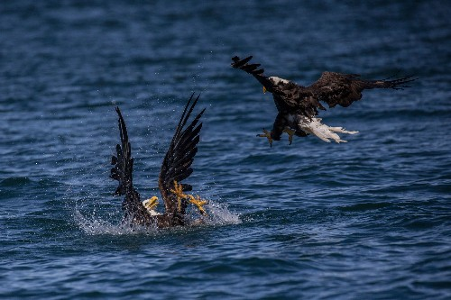 An eagle is perilously close to death. What would you do?