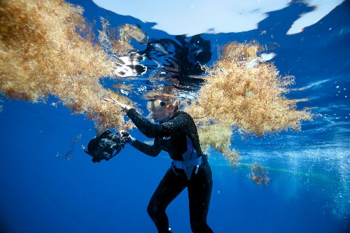 The Sargasso Sea: Why it's a living laboratory for change