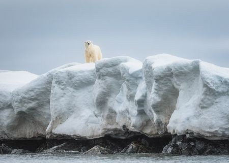 Curious polar bear Photo by Jennifer Frickell — National Geographic Your Shot