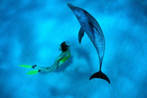 How Dolphins Healed An Author's Broken Heart