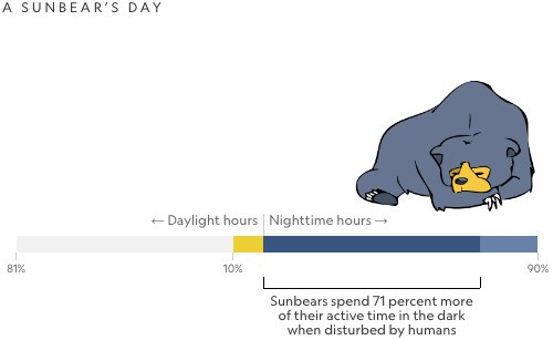 More Animals Becoming Night Owls, Thanks to Humans