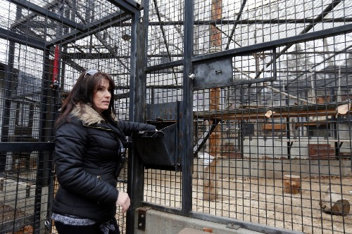 How Some U.S. Ape Sanctuaries Fail Their Animals and Staff