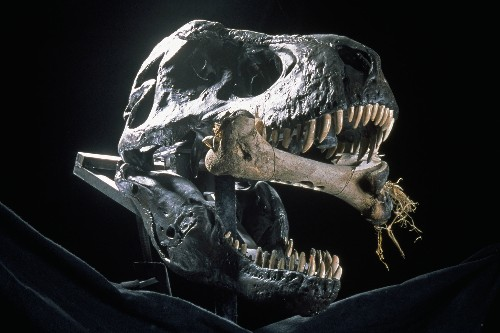 Why Today is the Golden Age for Dinosaur Discoveries
