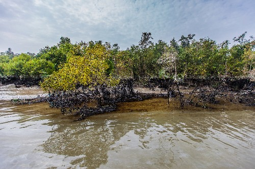 After Oil Spill in Bangladesh's Unique Mangrove Forest, Fears About Rare Animals