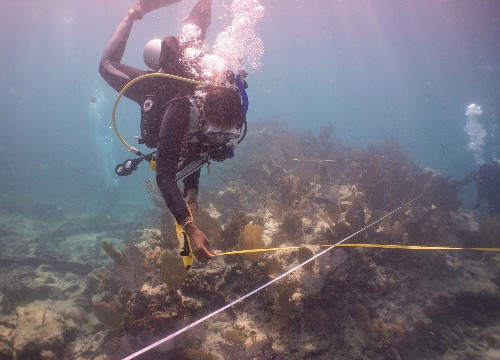 Diving into the unfolding history of wrecked slave ships