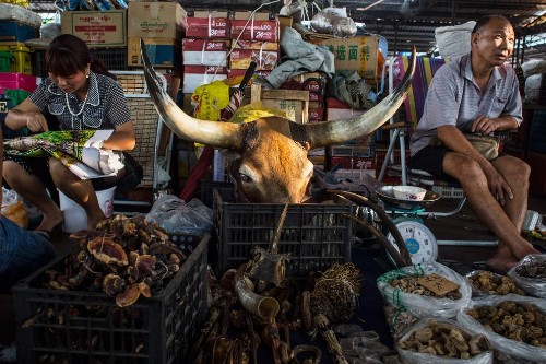 China's Expanding Middle Class Fuels Poaching, Decadence in Myanmar