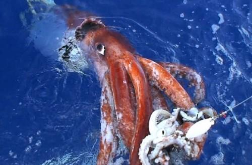The Global Kraken