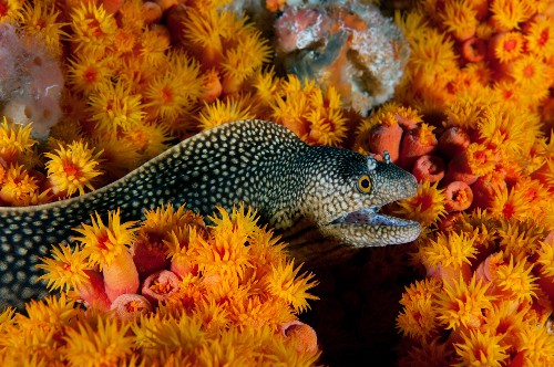 Underwater Pictures Capture Life Inside World's Newest Marine Sanctuary
