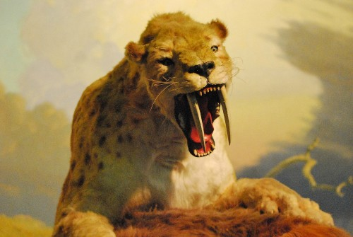 Sabercats and Other Carnivores Kept the Ice Age World Green