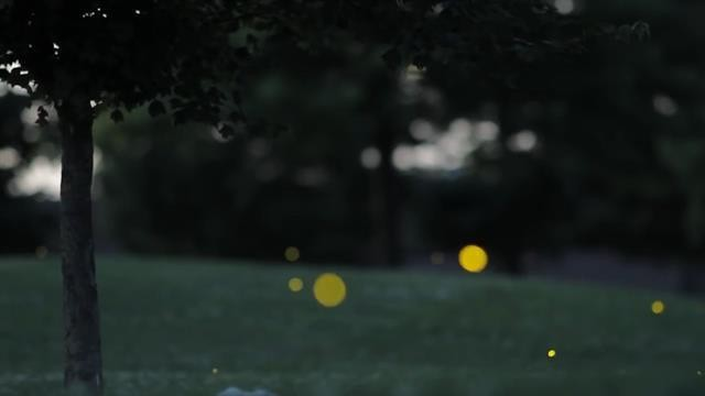 How Do Fireflies Glow? Mystery Solved After 60 Years