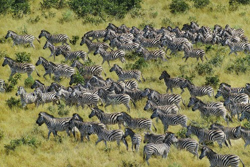 Longest Migration Among African Mammals Discovered