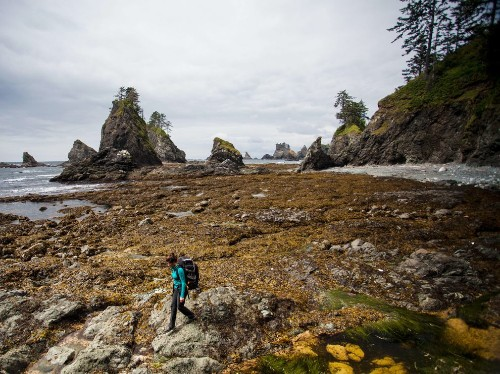 A guide to Olympic National Park