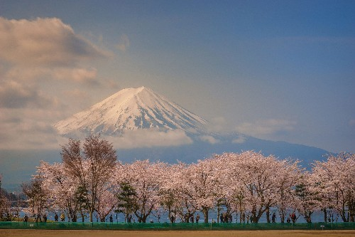 25 gorgeous photos of cherry blossoms