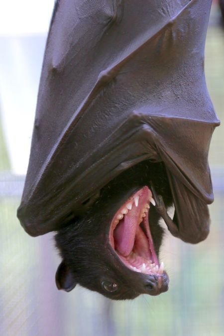 Bat breath! Photo by Katie Diamond — National Geographic Your Shot