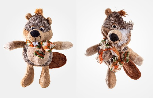 Playful Photos of Well-Loved Dog Toys