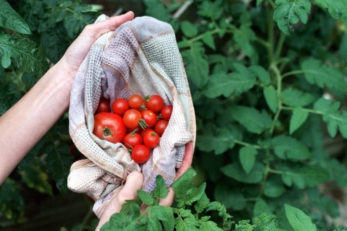 School Makerspaces: Growing Farmers, Gardeners, and Cooks