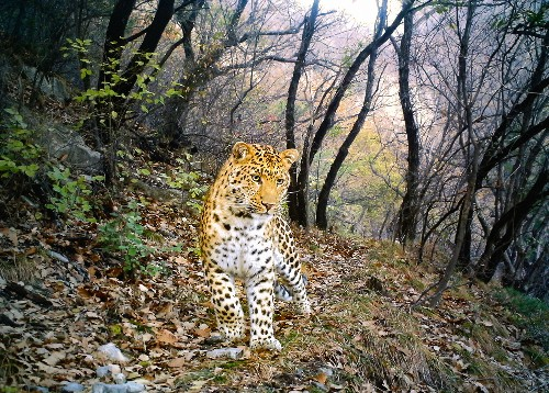 Best Camera-Trap Pictures of 2012