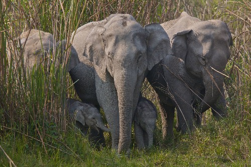 Elephant skin sales rapidly mounting