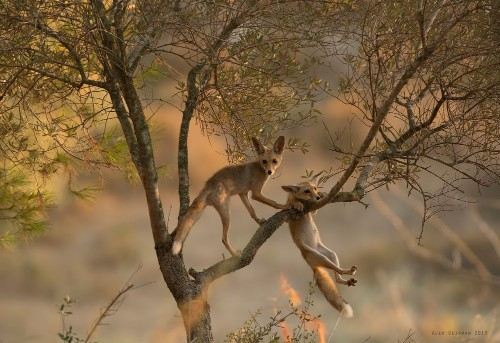 Hold on! Photo by Alex Geifman — National Geographic Your Shot