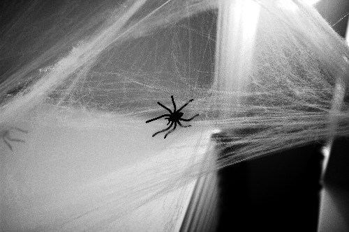 What Halloween Decorators Know About Spiders (Oddly, a Lot!)