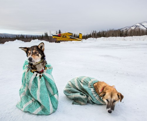 At a grueling subarctic race, a photographer finds calm