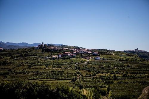 Savor the bounty of Slovenia's wine regions