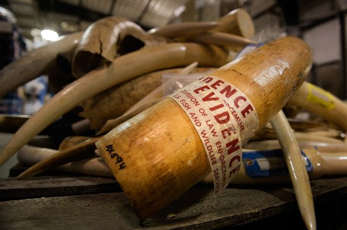 Opinion: U.S. Ivory Crush Should Be Just a First Step