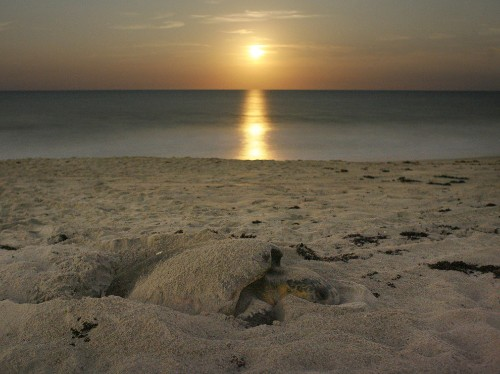 Florida by Water: See Sea Turtles in the Wild