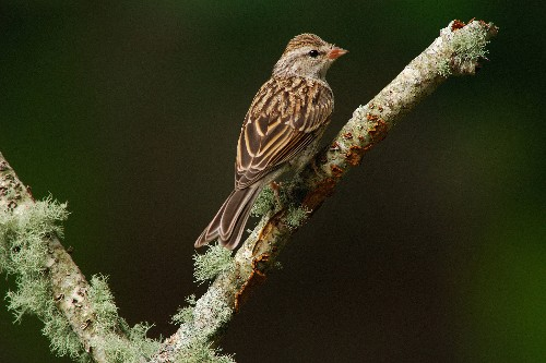 Three billion birds have been lost in North America since 1970