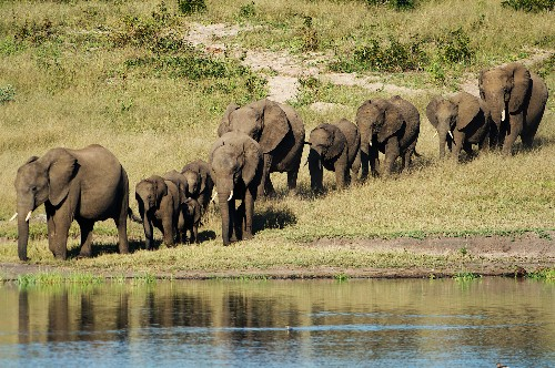 Wounded Elephant Crushes, Kills Trophy Hunter