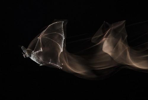 A Rare Look at Mexico's Carnivorous Bats