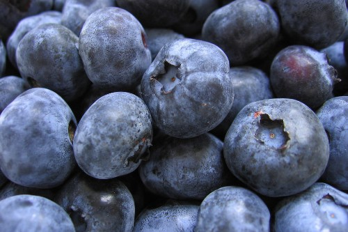 Blueberries, Already a Superfood, May Help Combat PTSD