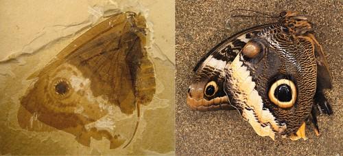 Butterflies Forty Million Years Before Butterflies