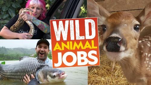Wild Animal Jobs
